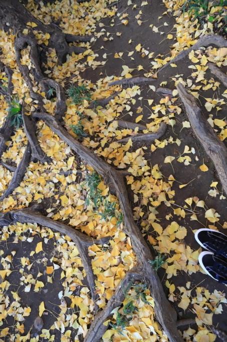 【水神神社】【肥後細川庭園】文京区レトロ建物探訪 part 6_f0348831_08190420.jpg