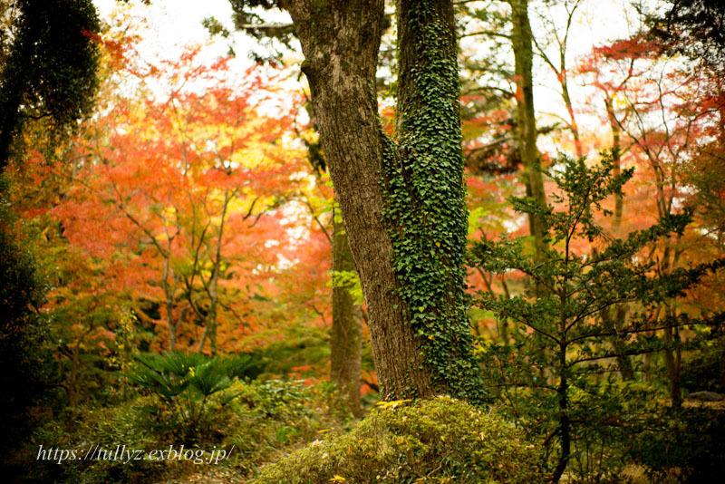 京都の秋2019(15)_d0108132_00151398.jpg