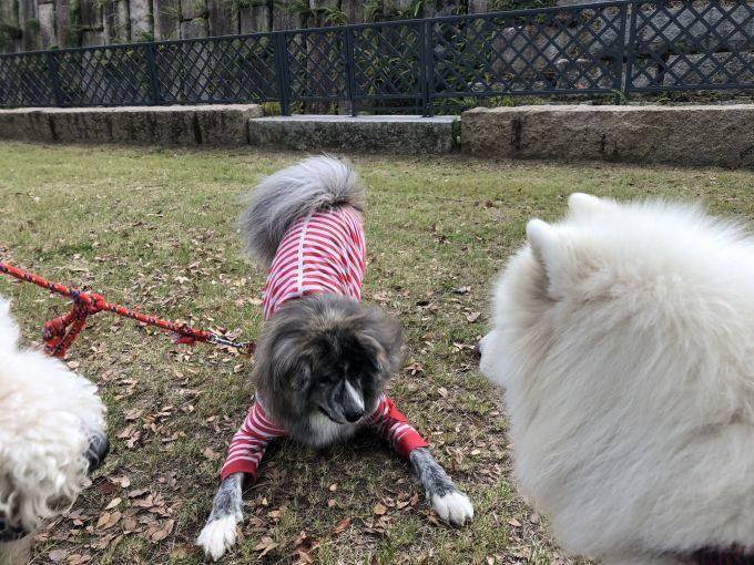 異犬種交流の日_f0128542_13273792.jpg