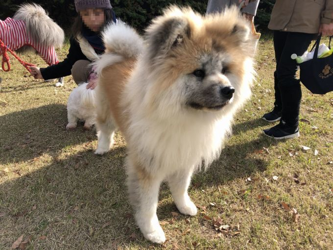 異犬種交流の日_f0128542_13301948.jpg