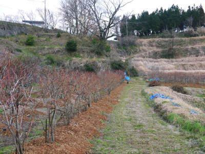フレッシュブルーベリー 紅葉と冬の剪定開始!おしどり夫婦が元気に頑張っています(後編)_a0254656_17515193.jpg