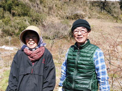 フレッシュブルーベリー 紅葉と冬の剪定開始!おしどり夫婦が元気に頑張っています(後編)_a0254656_18015387.jpg