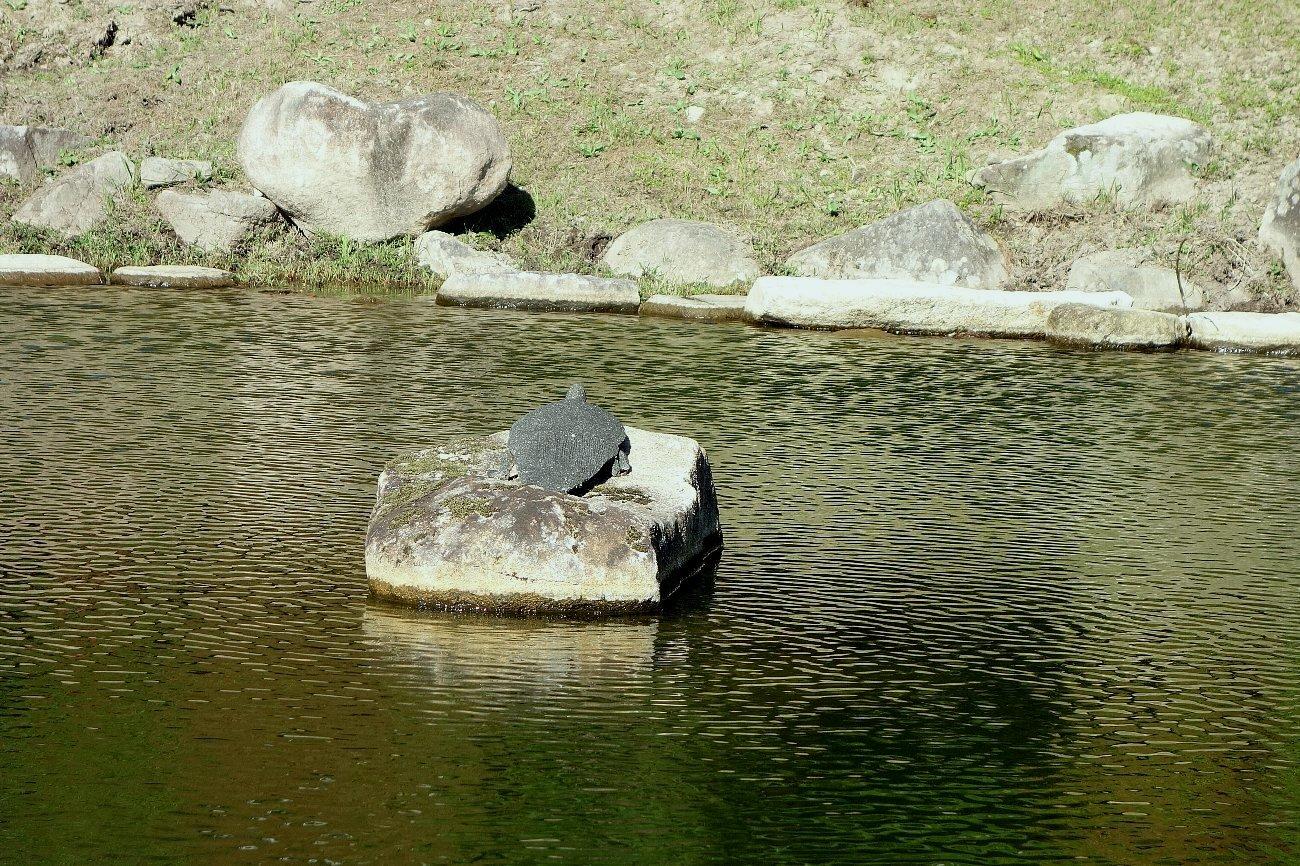 瑠璃光寺 五重塔と池泉庭園_c0112559_08265684.jpg