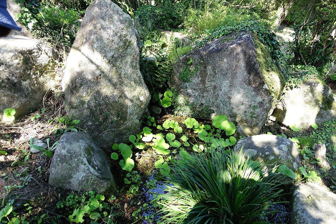 瑠璃光寺 五重塔と池泉庭園_c0112559_08314842.jpg