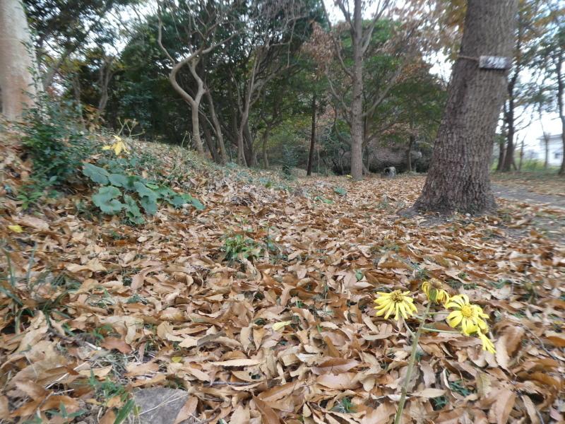 ササユリの道急斜面の草刈り・・・うみべの森_c0108460_18055262.jpg