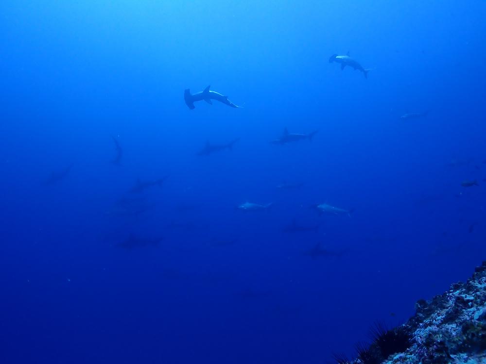 ハンマーにタイガー!!!やっぱりすごいよココ島!   COCO IS./COSTA RICA_e0184067_15494790.jpg