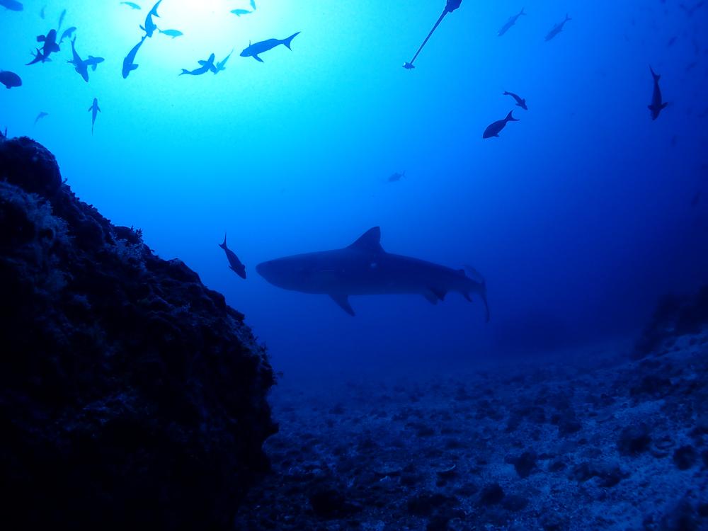 ハンマーにタイガー!!!やっぱりすごいよココ島!   COCO IS./COSTA RICA_e0184067_15495466.jpg