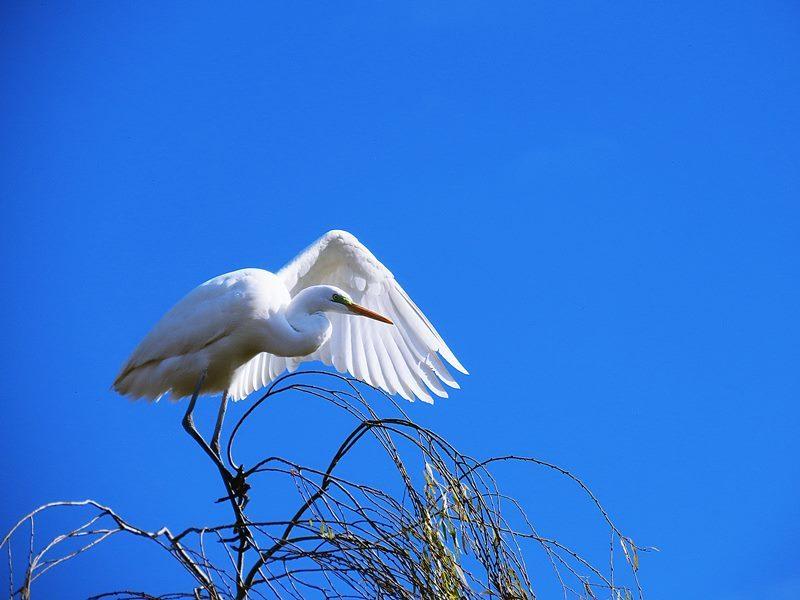 冬空を背に、その翼で何を試そうとしているのか。_b0018682_23345817.jpg