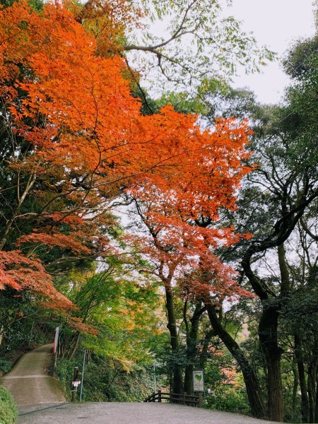 清水寺からのキャンプ_b0183583_00145201.jpg