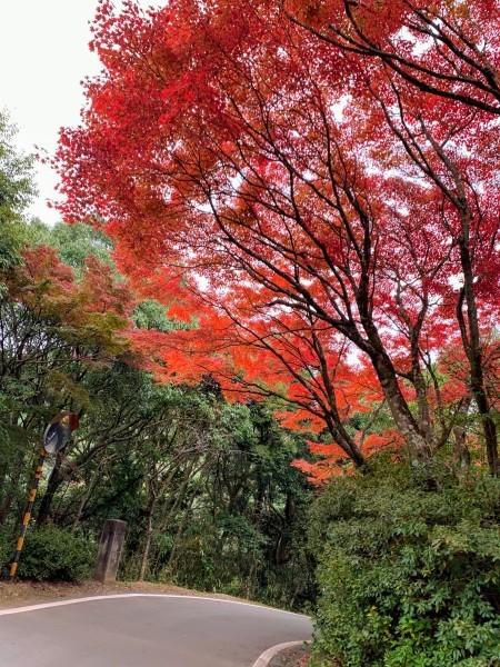 清水寺からのキャンプ_b0183583_01104034.jpg