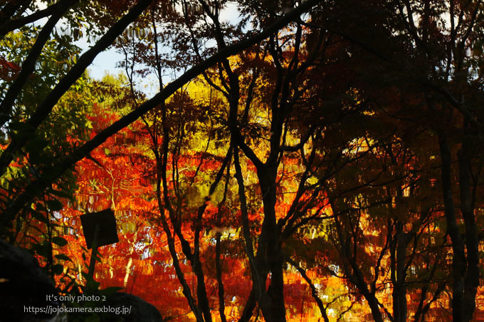 水面の紅葉*Ⅳ_b0391986_01402075.jpg