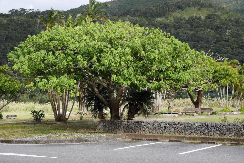 奄美大島の旅 2日目_c0252688_15420267.jpg