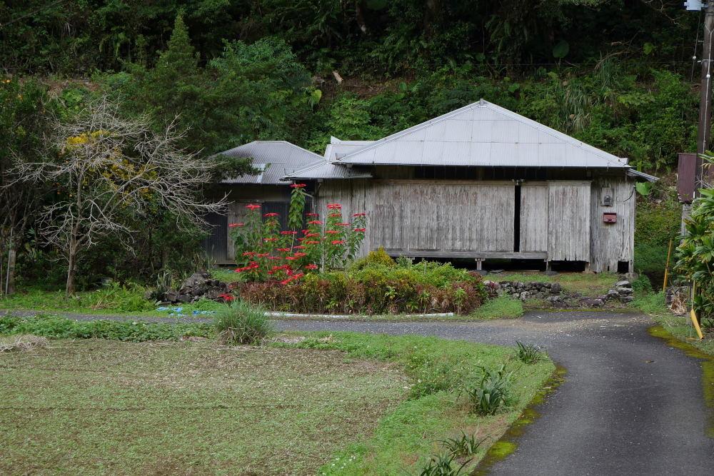 奄美大島の旅 2日目_c0252688_15422540.jpg
