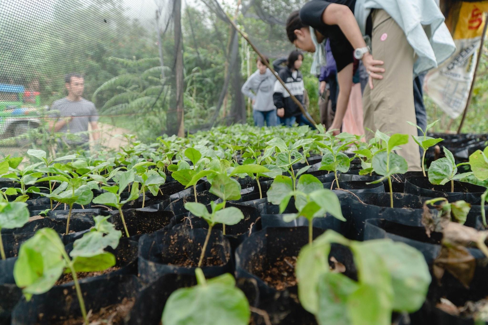 マナラボとの世界の人びとのためのJICA基金事業「小規模農家によるコーヒー生産のための加工・運営指導プロジェクト」_b0128901_20434385.jpg
