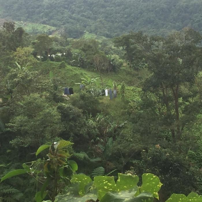 マナラボとの世界の人びとのためのJICA基金事業「小規模農家によるコーヒー生産のための加工・運営指導プロジェクト」_b0128901_20445367.jpg