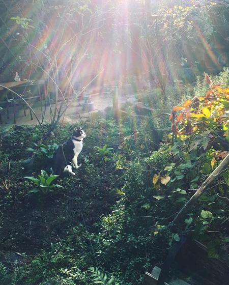 朝の中庭をみまわり。_d0077603_10200284.jpg