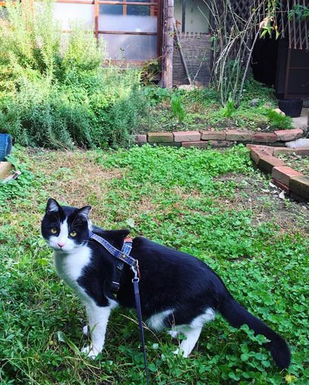 朝の中庭をみまわり。_d0077603_10201558.jpg