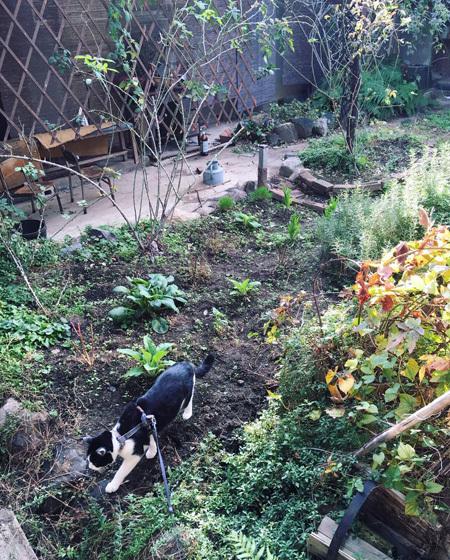 朝の中庭をみまわり。_d0077603_10202509.jpg