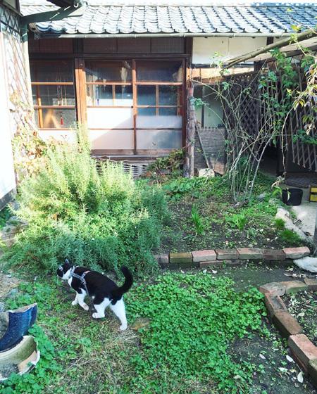 朝の中庭をみまわり。_d0077603_10210409.jpg