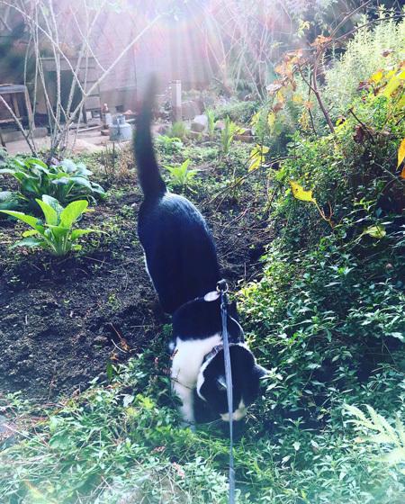 朝の中庭をみまわり。_d0077603_10253720.jpg