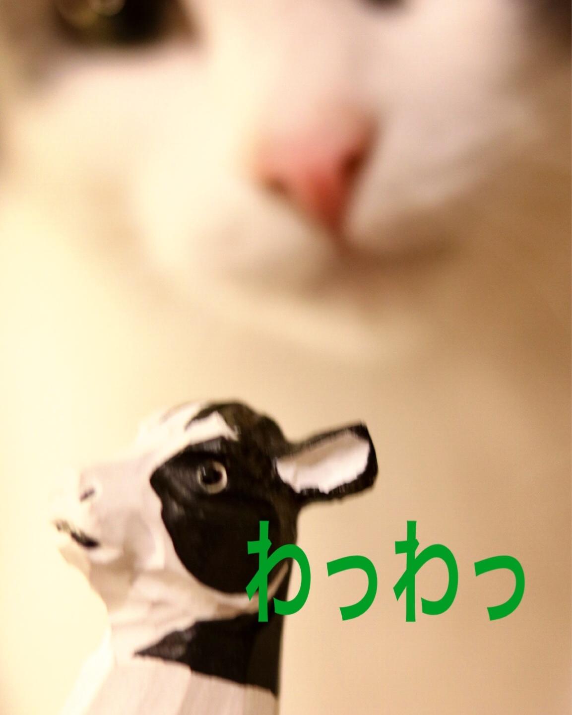 にゃんこ劇場「ふくちゃん、牛を食う?」_c0366722_21080316.jpeg