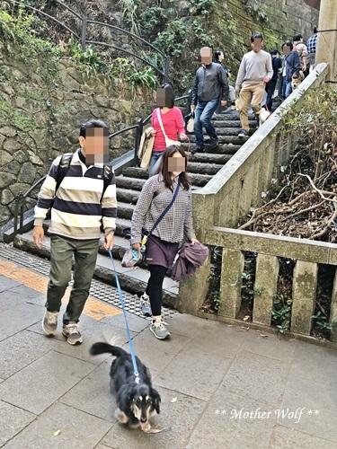 第26回マザーウルフ遠足 江ノ島レポート_e0191026_12522284.jpg