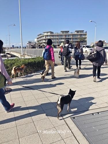 第26回マザーウルフ遠足 江ノ島レポート_e0191026_14052094.jpg