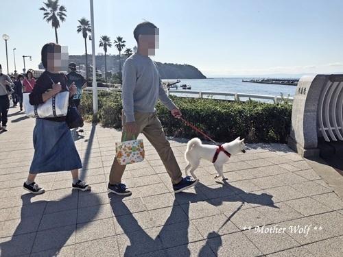 第26回マザーウルフ遠足 江ノ島レポート_e0191026_14063029.jpg
