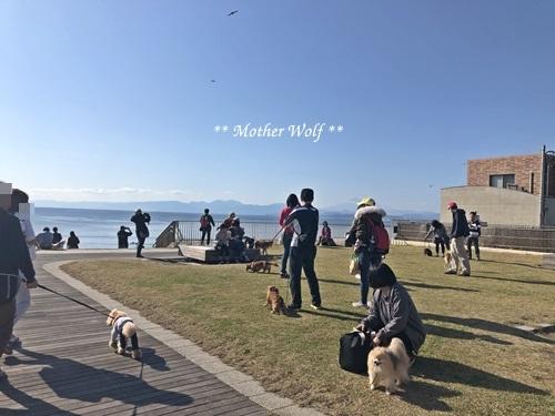 第26回マザーウルフ遠足 江ノ島レポート_e0191026_14081650.jpg
