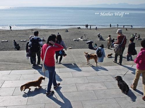 第26回マザーウルフ遠足 江ノ島レポート_e0191026_14121720.jpg
