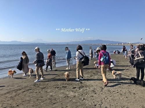 第26回マザーウルフ遠足 江ノ島レポート_e0191026_15220128.jpg