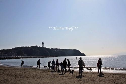 第26回マザーウルフ遠足 江ノ島レポート_e0191026_15312481.jpg