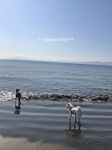 第26回マザーウルフ遠足 江ノ島レポート_e0191026_16101903.jpg