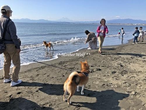 第26回マザーウルフ遠足 江ノ島レポート_e0191026_16160715.jpg
