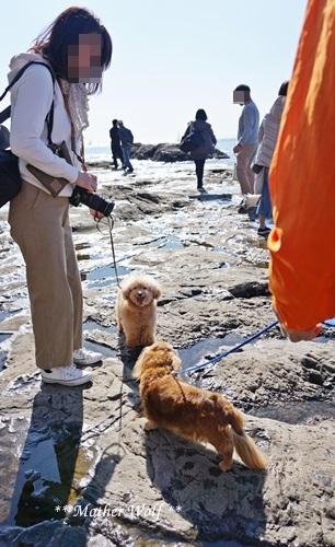第26回マザーウルフ遠足 江ノ島レポート_e0191026_17201262.jpg