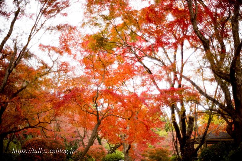 京都の秋2019(13)_d0108132_10031916.jpg