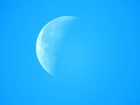 自然観察最高です_a0123836_16064727.jpg