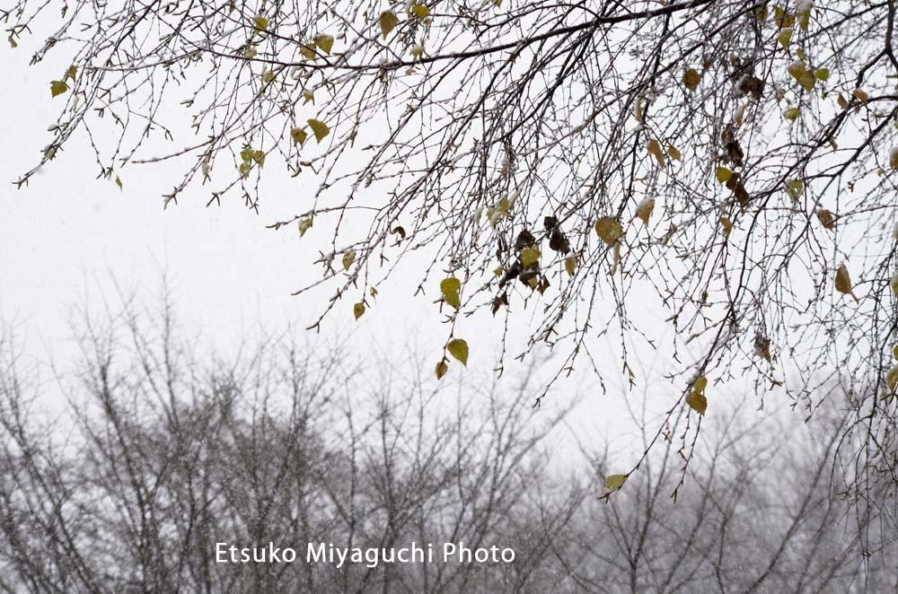 雪の少ない12月_f0152939_14423665.jpg