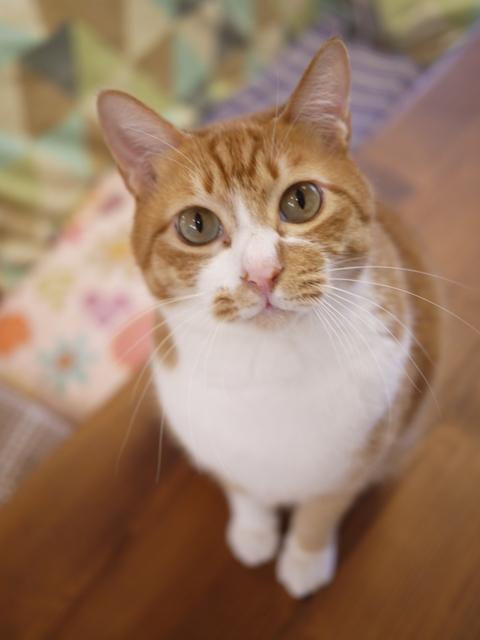 猫のお留守番 チャイくん編。_a0143140_23522347.jpg