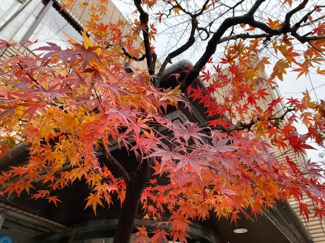 December   冬も異常気象?_a0165160_17023907.jpg
