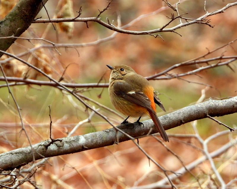 嶺公園で ~ 小鳥たち ~_c0305565_17261086.jpg