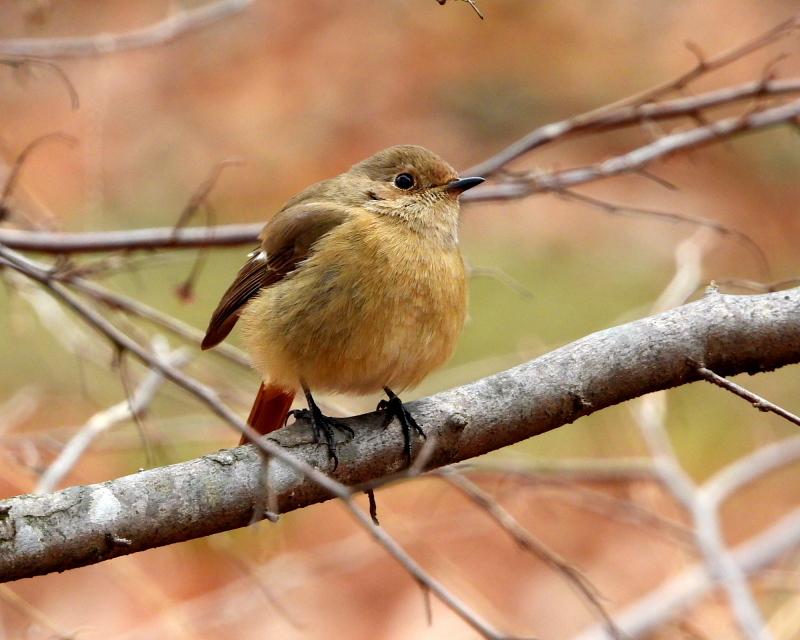 嶺公園で ~ 小鳥たち ~_c0305565_17262203.jpg