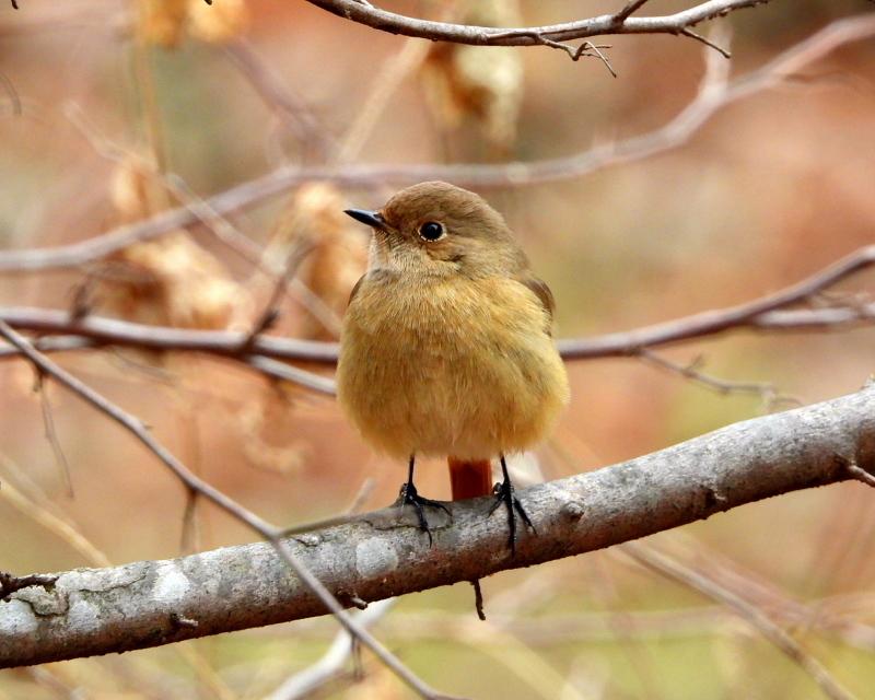 嶺公園で ~ 小鳥たち ~_c0305565_17263170.jpg
