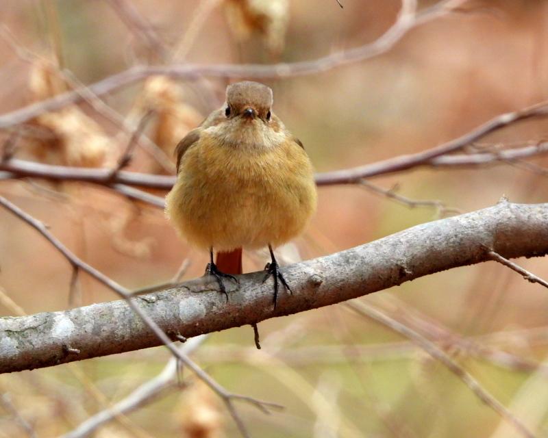 嶺公園で ~ 小鳥たち ~_c0305565_17264741.jpg