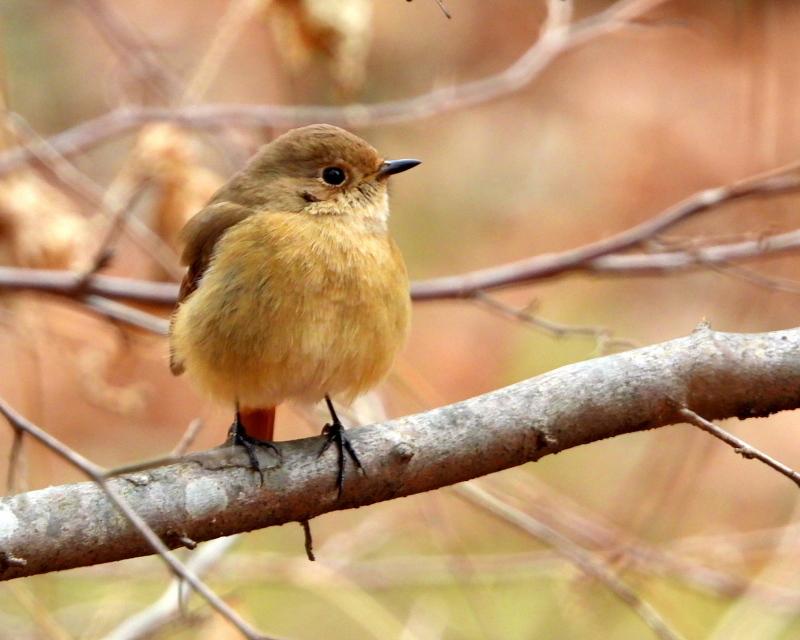 嶺公園で ~ 小鳥たち ~_c0305565_17265942.jpg
