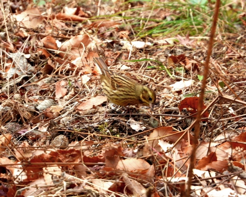 嶺公園で ~ 小鳥たち ~_c0305565_17271235.jpg