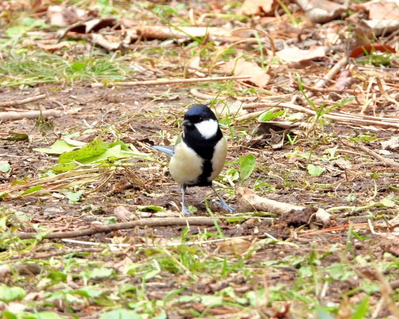 嶺公園で ~ 小鳥たち ~_c0305565_17275915.jpg