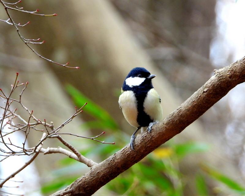 嶺公園で ~ 小鳥たち ~_c0305565_17281314.jpg