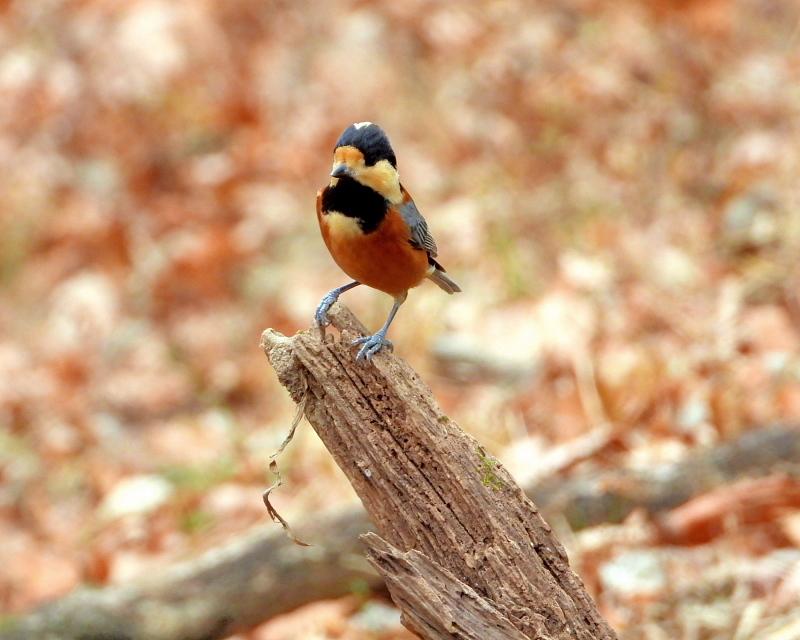 嶺公園で ~ 小鳥たち ~_c0305565_17290270.jpg