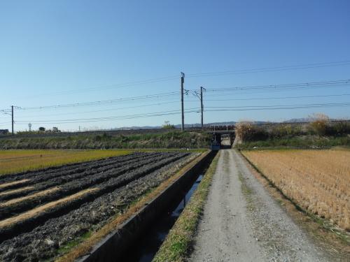 グラベルロードで奈良散歩_b0332867_20585386.jpg